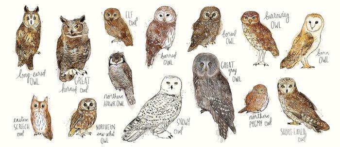Owls Kaffeebecher