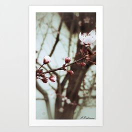 Give a flower love and it will bloom Art Print
