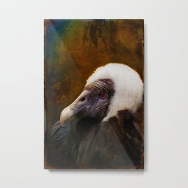 Finer Feathered Friends: Andean Condor Metal Print