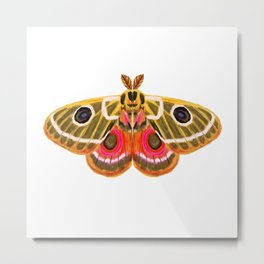 Moth Study No. 15 - moth art, moth sticker Metal Print