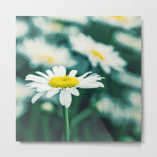 daisies Metal Print