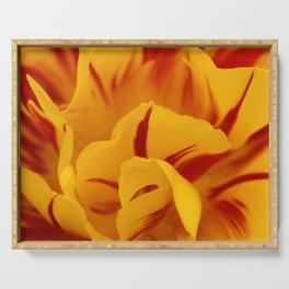A Chaos of Reds and Yellows: in the Heart of a Triandrus Daffodil Serving Tray