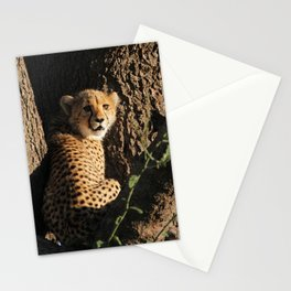 Cute little baby cheetah | Wildlife travel photography | Fluffy wall art Stationery Cards