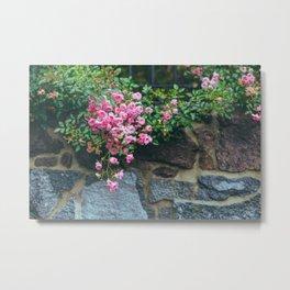 wall of roses Metal Print