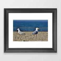 Two seagulls Framed Art Print