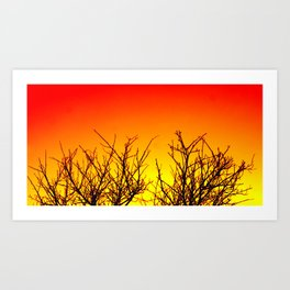 Sunset Twigs Art Print