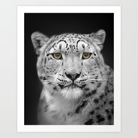 snow leopard Art Prints featuring Snow Leopard by Linsey Williams Wall Art, Clothing, And