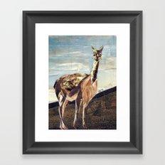 Vicuna Framed Art Print