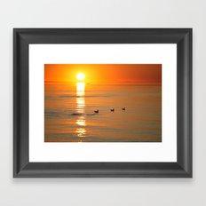 seagull at sundown Framed Art Print