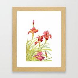 Red iris Framed Art Print
