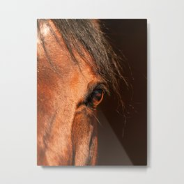 eye of horse. horse collection Metal Print