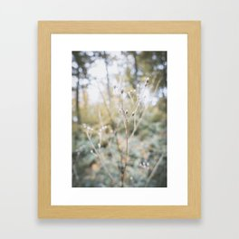 Forest (I) Framed Art Print