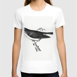 Dark-eyed junco from Report of an expedition down the Zuni and Colorado Rivers (1853) T-shirt