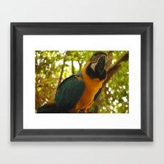 parrot 2 Framed Art Print