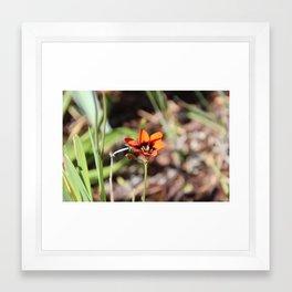 Orange Flower Framed Art Print