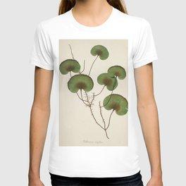 Kidney Fern T-shirt