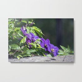 Longwood Gardens - Spring Series 143 Metal Print