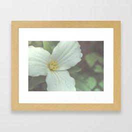 Trillium Framed Art Print