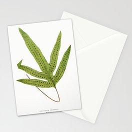 Edward Joseph Lowe - Polypodium Peltideum Stationery Cards