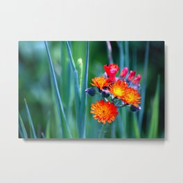 Fire Colors in the Greenery Metal Print