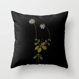Cineraria Amelloides Mary Delany Delicate Paper Flower Collage Black Background Floral Botanical Throw Pillow