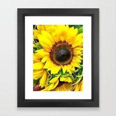 Sunflower Sunshine Framed Art Print