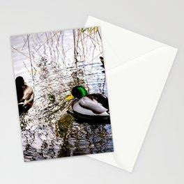 Three mallard ducks in a pond Stationery Cards