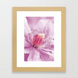 Clematis pink macro 086 Framed Art Print