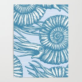 AMMONITE COLLECTION Poster