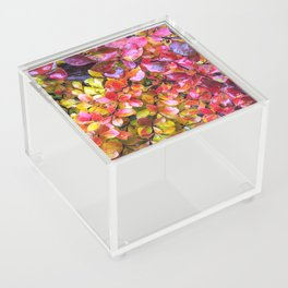 Barberry Fall Colors Acrylic Box