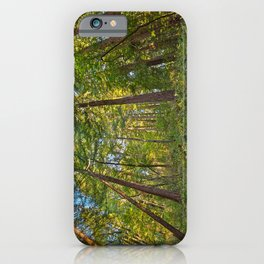 Muir Woods iPhone Case