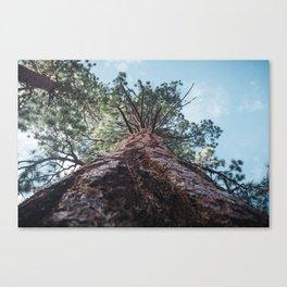 California Mountain Tree Canvas Print