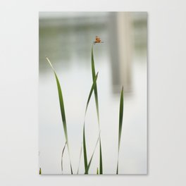 dragonfly3 Canvas Print