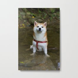 KUMA: Shiba In River 1 Metal Print