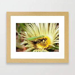 Praying Mantis Framed Art Print