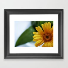 Yellow Gerbera Framed Art Print