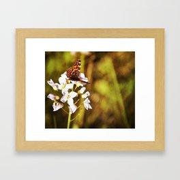 Gold Butterfly Framed Art Print