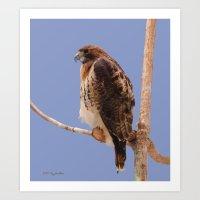 hawk Art Prints featuring Hawk by DiDi Higginbotham