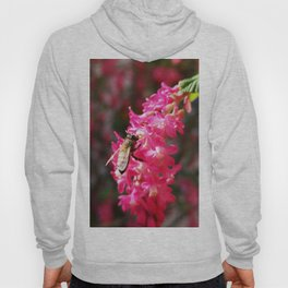Bee2 and Blood Currant Ribes Sanguineum std Hoody