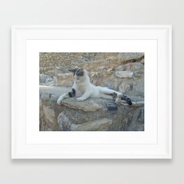 Cat playing with blade of grass Framed Art Print