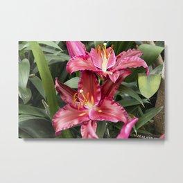 Longwood Gardens Orchid Extravaganza 42 Metal Print