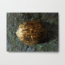 Golden Nut Shell Metal Print