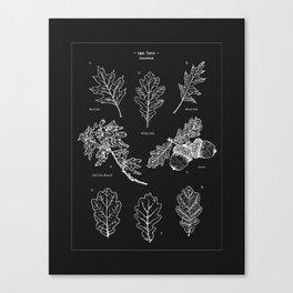 Oak Tree Elements Canvas Print