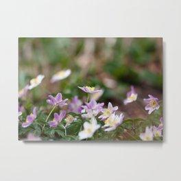 Purple Wood Anemones Metal Print