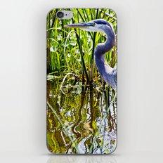 Great Blue Heron In The Wetlands iPhone & iPod Skin