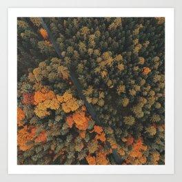 Autumn Photography - Road Dividing Forest Art Print