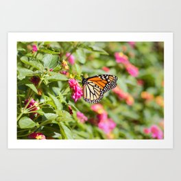 Monarch Butterfly Profile Art Print