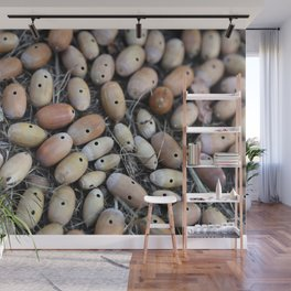 Acorns with Holes No.2 Wall Mural