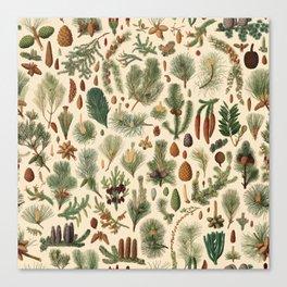 Vintage Pinecones Designs Collection Canvas Print