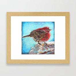 Shivering House Finch Framed Art Print